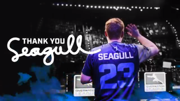 thank you seagull